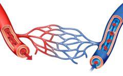 Гиповолемия: симптомы и лечение
