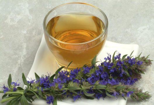 Чай с иссопом (синий зверобой) - эффективное средство при повышенной потливости ног
